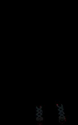 Neyline